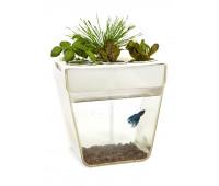 АкваФерма Самоочисний акваріум, який вирощує їжу